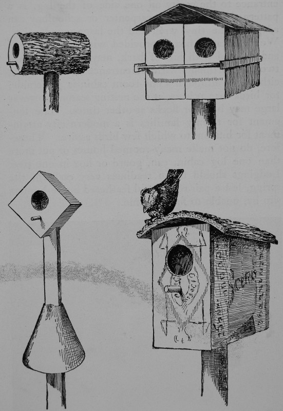 How to attract the birds chapter 1 for Types of birdhouses for birds